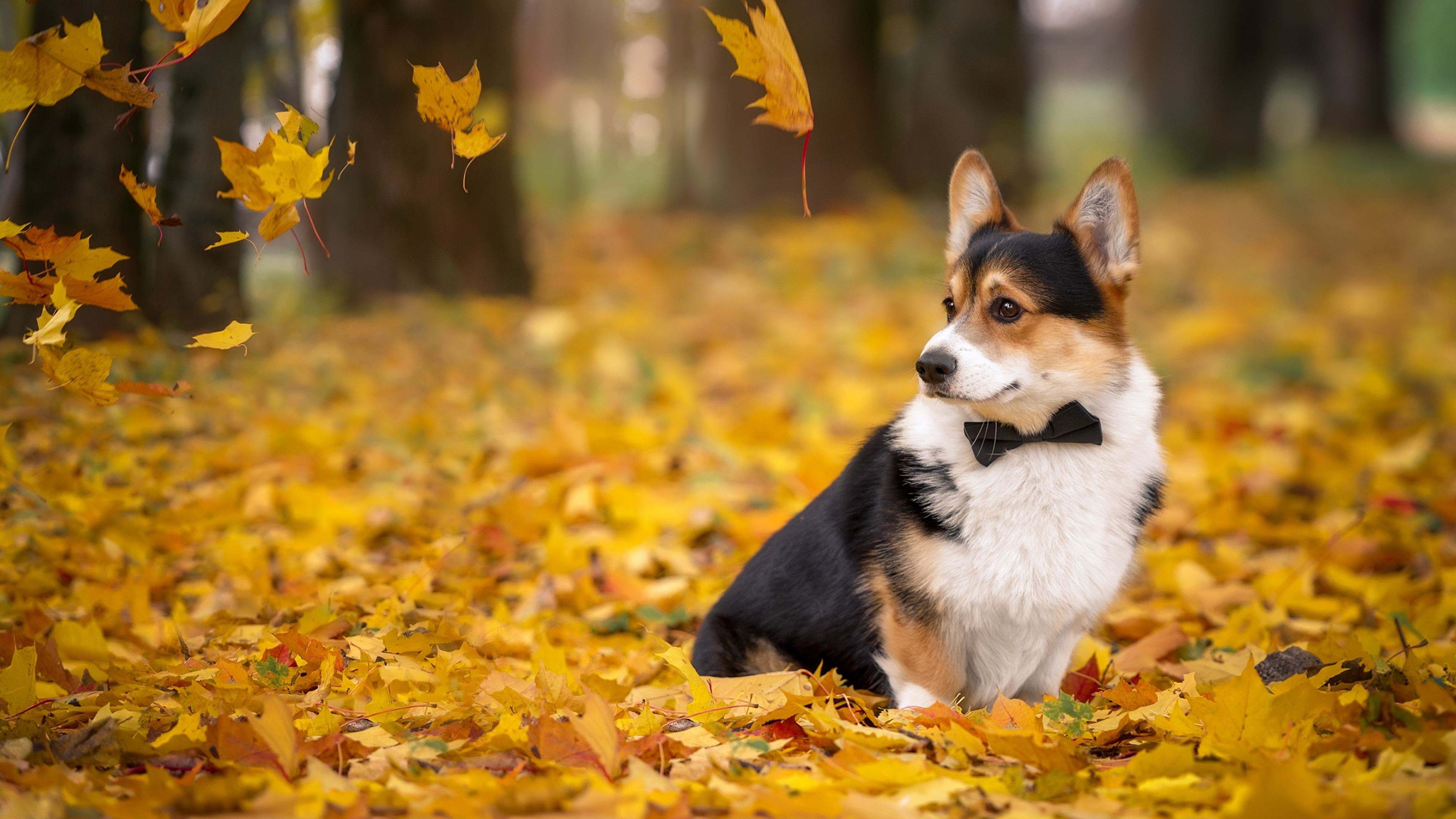собаки и осень. фото