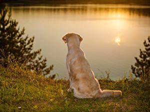 Обои Собаки Голден Берег Рассветы и закаты