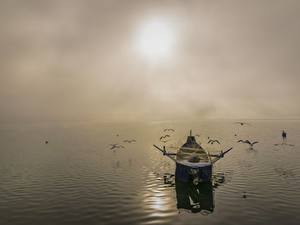 Фотография Рассветы и закаты Море Птицы Лодки Чайка Ловля рыбы Тумана
