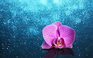 Фотографии Орхидея Розовая Цветы