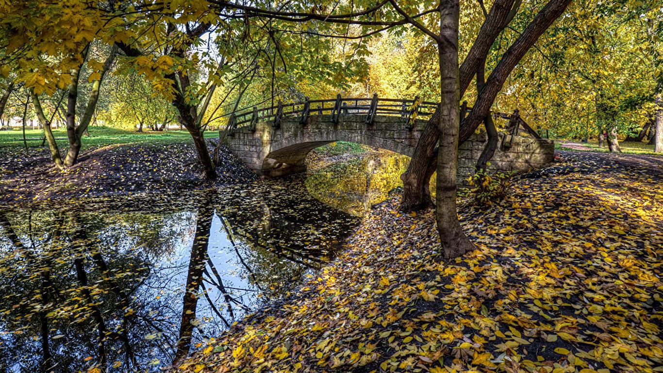 Фото Санкт-Петербург лист Россия Park Ekaterinhof Мосты Природа осенние Парки Реки дерево 1366x768 Листья Листва Осень речка дерева Деревья деревьев