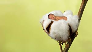 Картинка Цветной фон Младенца Спят Гнезда
