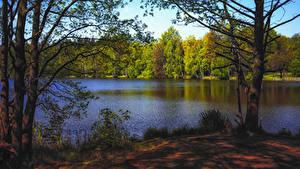 Фотографии Осень Леса Озеро Деревья Природа
