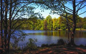 Фотографии Осень Лес Озеро Деревья Природа