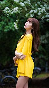 Фотография Азиатка Размытый фон Поза Платье Рука Шатенки молодая женщина
