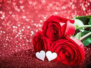 Фотография Розы День святого Валентина Сердечко