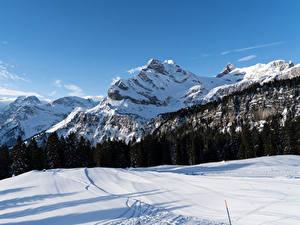 Фотография Швейцария Горы Зимние Леса Альпы Снег Braunwald Canton of Glarus