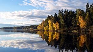 Обои Леса Осень Озеро Швеция Деревья Flaten lake Природа