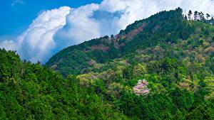 Картинки Япония Гора Лес Природа