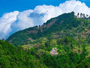 Картинки Япония Гора Лес