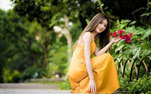 Обои Азиатки Боке Позирует Сидящие Платья Рука Шатенки Миленькие девушка