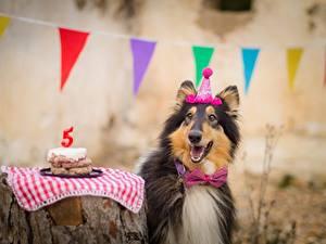 Картинка Собаки День рождения Колли Галстук-бабочка Счастье Животные