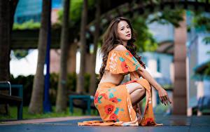 Картинки Азиатка Шатенка Сидит Размытый фон молодая женщина