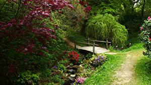 Картинка Англия Сады Мост Ручеек Кусты Ветка Ramster Gardens Surrey Природа