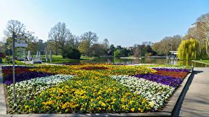 Фотографии Германия Парки Пруд Газон Botanischer Garten Karlsruhe Природа