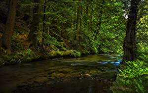 Фото Леса Деревьев Ручей Мох Природа