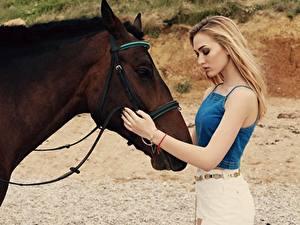 Картинка Лошади Блондинка Коричневый Руки Девушки Животные