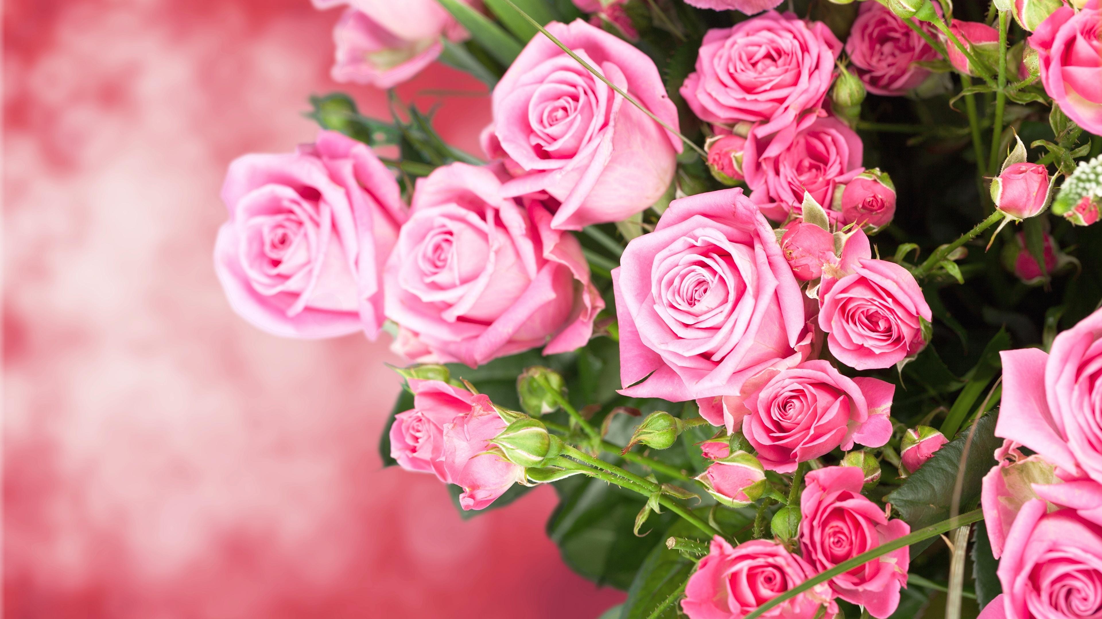 Обои . Цветы foto 17