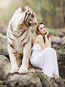 Картинки Камень Тигры Азиаты 2 Шатенка Сидящие Bengal tiger Животные