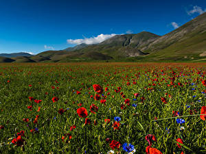 Картинка Италия Парки Поля Маки Васильки Холм Sibillini national park