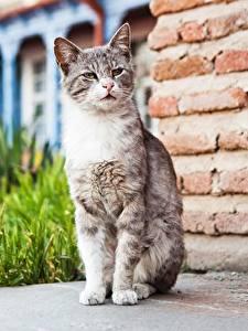 Фотографии Коты Сидящие Смотрит