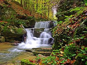 Фотография Польша Камень Осень Водопады Мох Листья Bieszczady