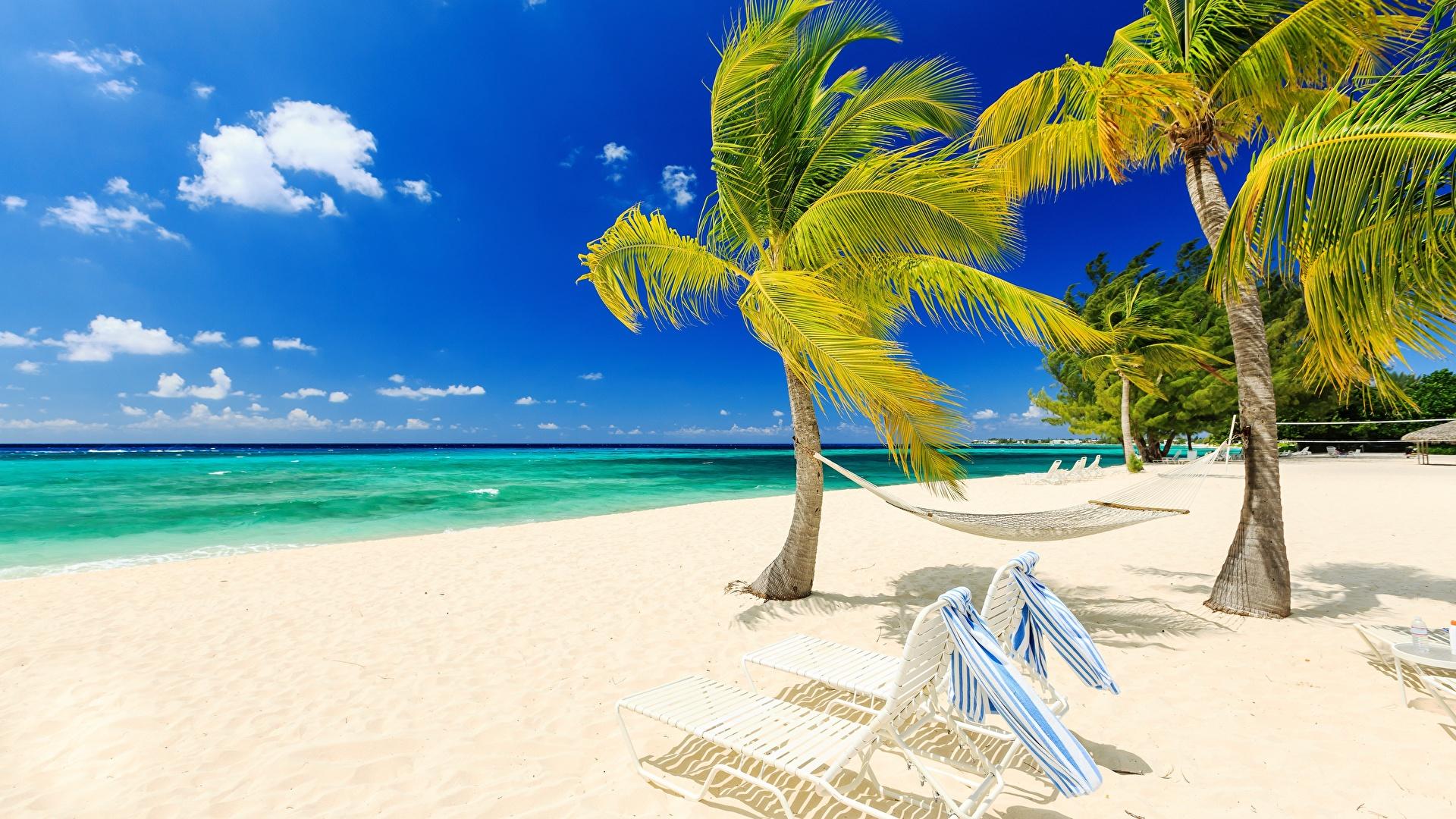 Фото пляж пальмы море