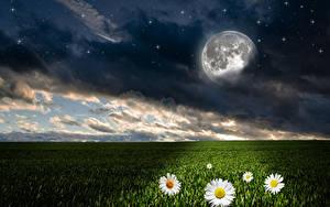 Фотографии Пейзаж Поля Небо Ромашка Звезды Ночью Луна Облака Природа