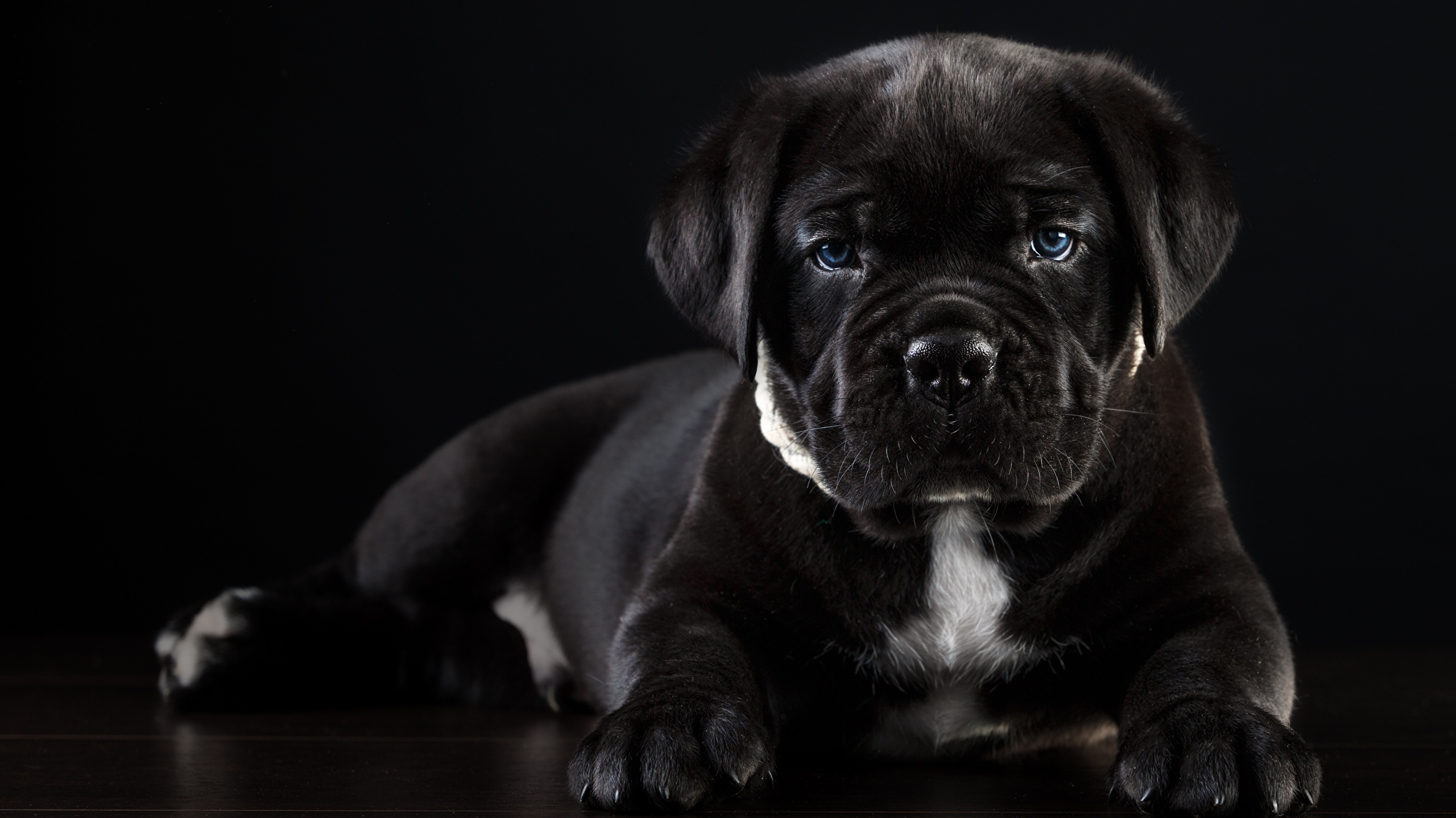 Обои Чёрная. Животные foto 19