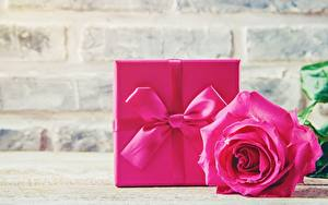 Фотография Розы Розовый Подарки Бантик Цветы