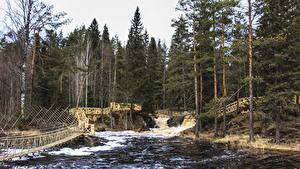 Обои Россия Лес Реки Водопады Мосты Ели Ruskeala Ahvenkoski Waterfall Karelia Republic Природа