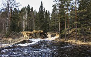Обои Россия Леса Реки Водопады Мосты Ели Ruskeala Ahvenkoski Waterfall Karelia Republic Природа