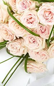 Фотографии Розы Букеты Розовый Цветы