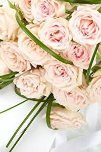 Фотографии Розы Букеты Розовый