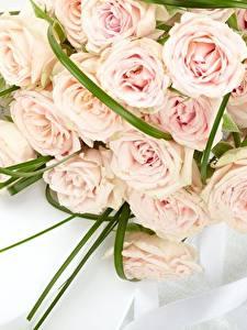 Фотографии Роза Букет Розовые цветок