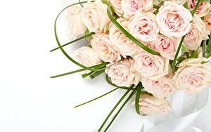 Фотографии Розы Букеты Розовые Цветы