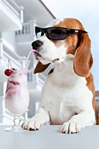 Картинка Собаки Коктейль Бокал Очках Смешные Бигль Животные