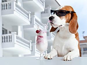 Картинка Собака Коктейль Бокал Очках Смешные Бигль Животные