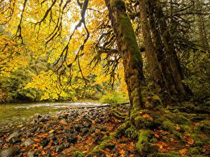 Фото Канада Парк Река Осенние Камни Ствол дерева Мох Листья Vancouver Island Parks Природа