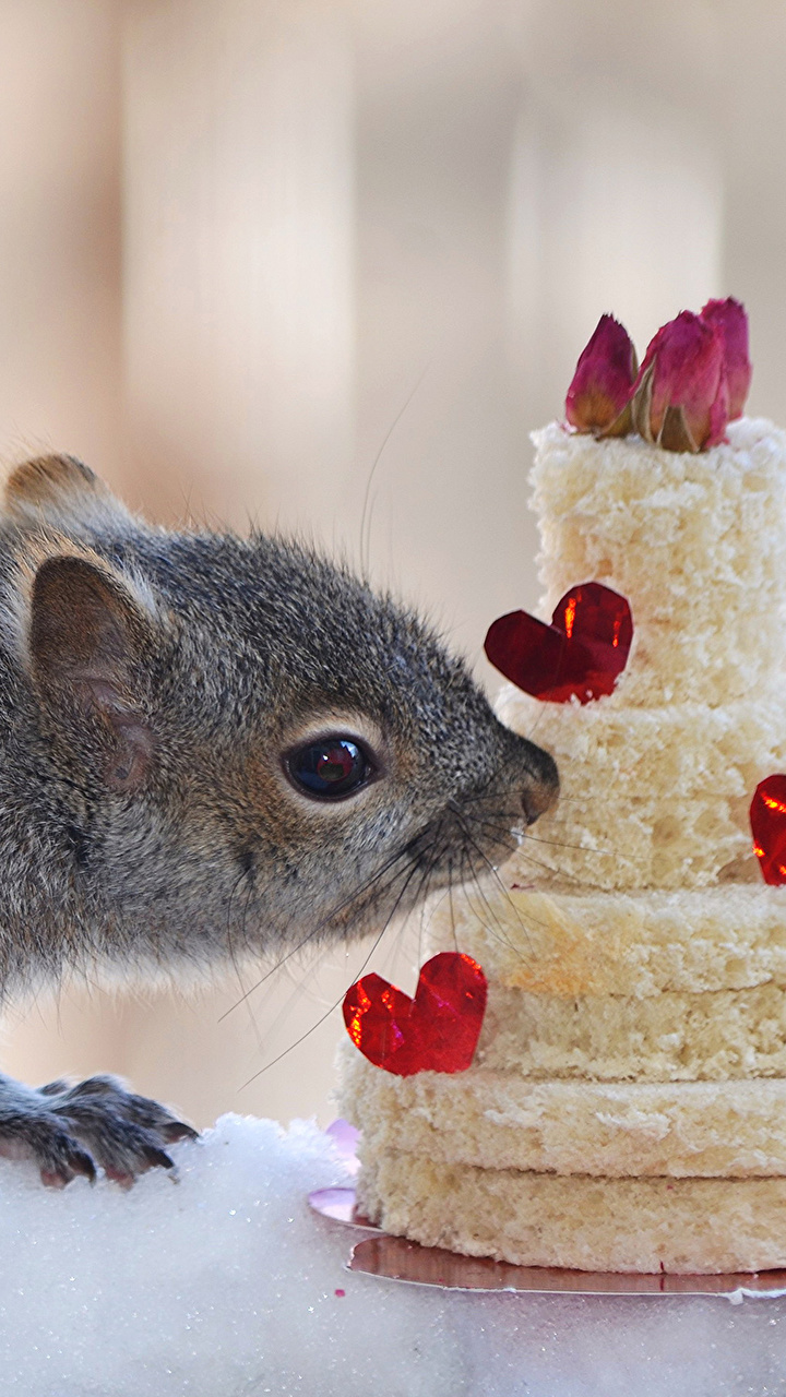 Обои Белки сердечко Торты Пища Животные Сладости 720x1280 Сердце Еда Продукты питания
