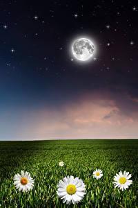 Фото Поля Ромашка Небо Звезды Ночь Луна Природа