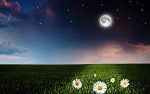 Фото Поля Ромашки Небо Звезды Ночные Луна Природа