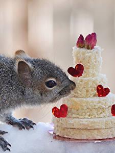 Обои Белки Сладкая еда Торты Сердечко Животные