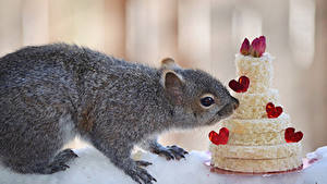 Обои Белки Сладкая еда Торты Сердечко Животные Еда