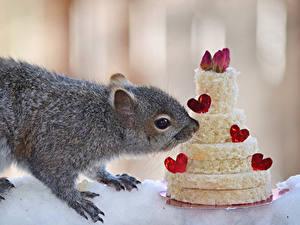 Обои Белка Сладкая еда Торты Сердечко Животные