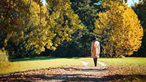 Фотографии Осенние Тропинка Листва Гуляет Вид сзади Природа Девушки