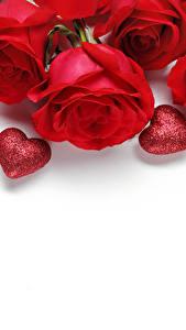 Картинки День святого Валентина Роза Белым фоном Красных Серце цветок