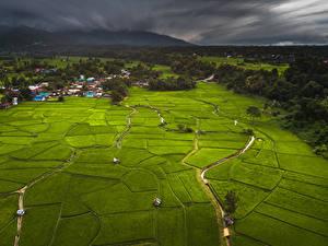 Картинка Таиланд Тропики Поля Здания Леса Phuket Природа