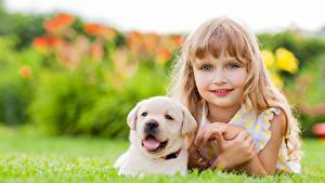 Фотографии Собаки Девочки Смотрит Ретривер Лица Миленькие Щенок Красивые Дети