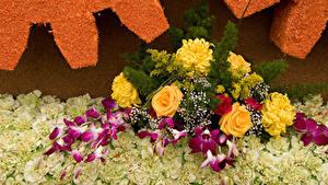 Обои Розы Орхидеи Хризантемы